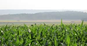 Farm insurance crop image