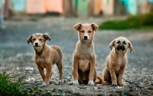 dog insurance uk