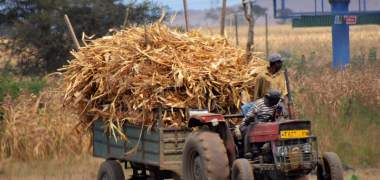 Best Insurance Startups for Small Scale Farmers in Africa